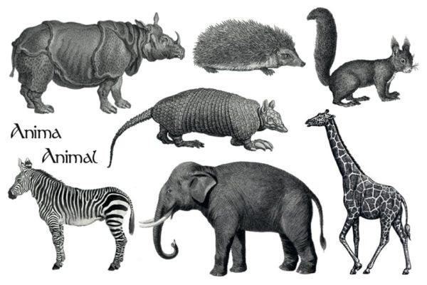 Tatouages - Gravures animalières