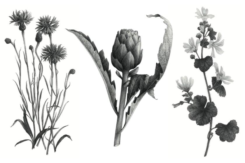 Tatouages - Les Fleurs Du Bien 2/2