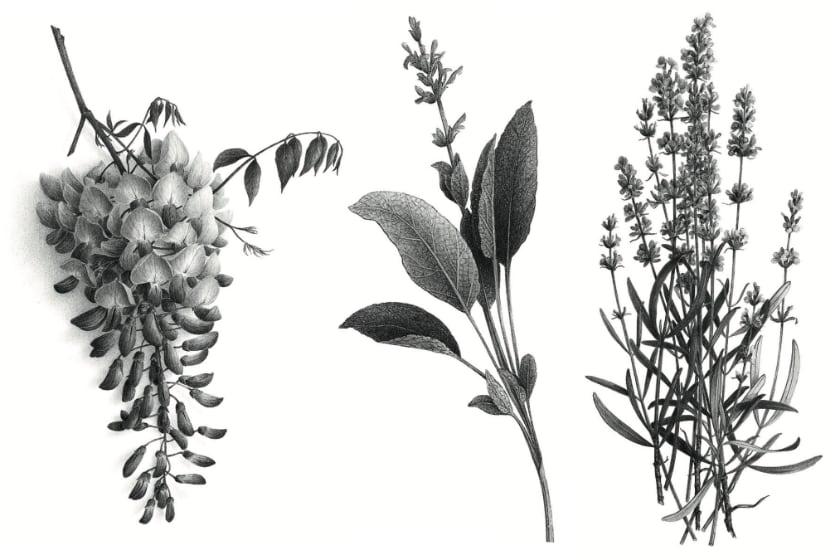 Tatouages - Les Fleurs Du Bien 1/2