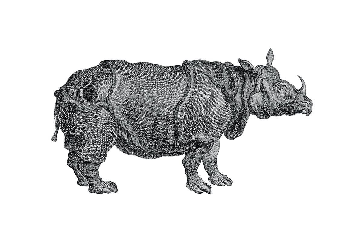 Rhino2def